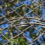 256px-Barbed_tape_behind_a_chain_link_fence